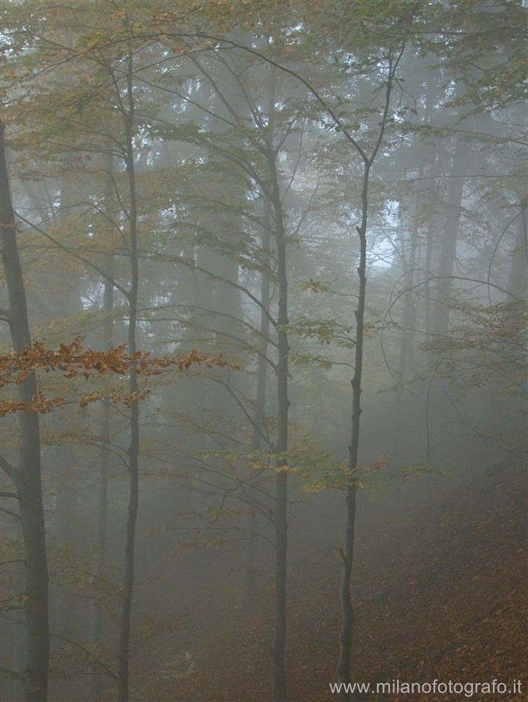 Sanctuary of Oropa (Biella, Italy) - Wood in the morning fog