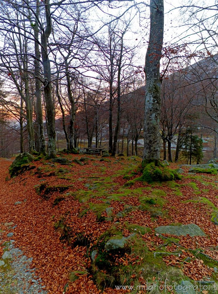 Sanctuary of Oropa (Biella, Italy) - Autumn darkening in the woods