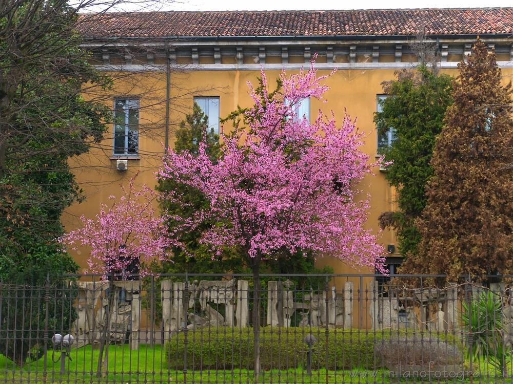 Milan (Italy) - Spring colors in the city center