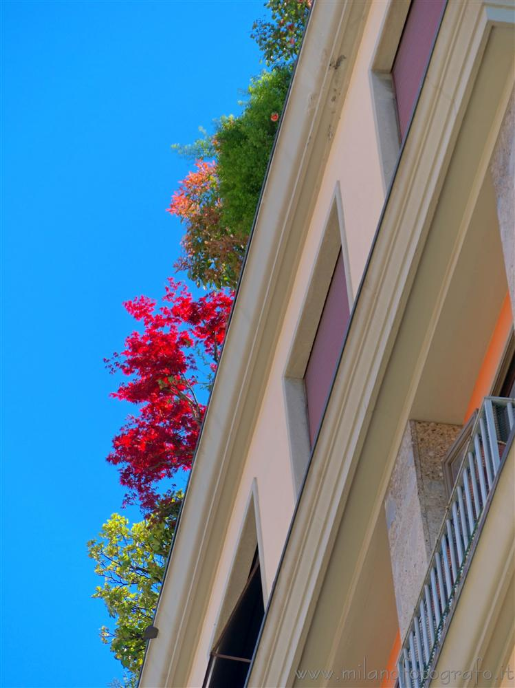Milan (Italy) - Spring colors in the plants on a terrasse in the center