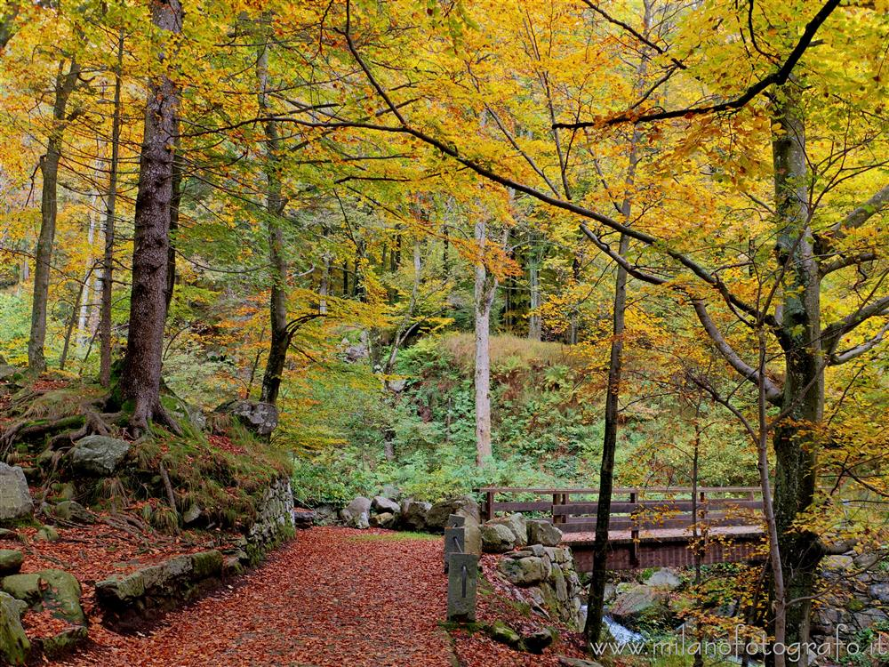 Oropa (Biella, Italy) - Autumn woods with little bridge near the sanctuary