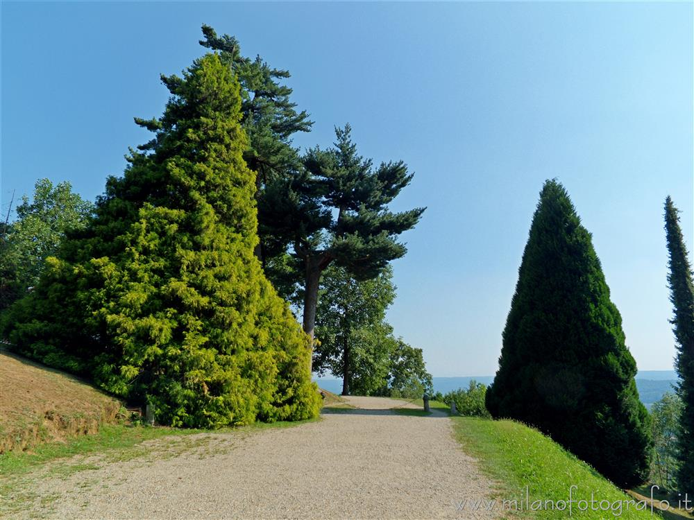 Burcina Park in Pollone (Biella. Italy) - Exotic trees at the sides of the road