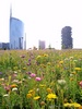 Milan (Italy): The skyscrapers of Porta Nuova on the background of a flowery meadow