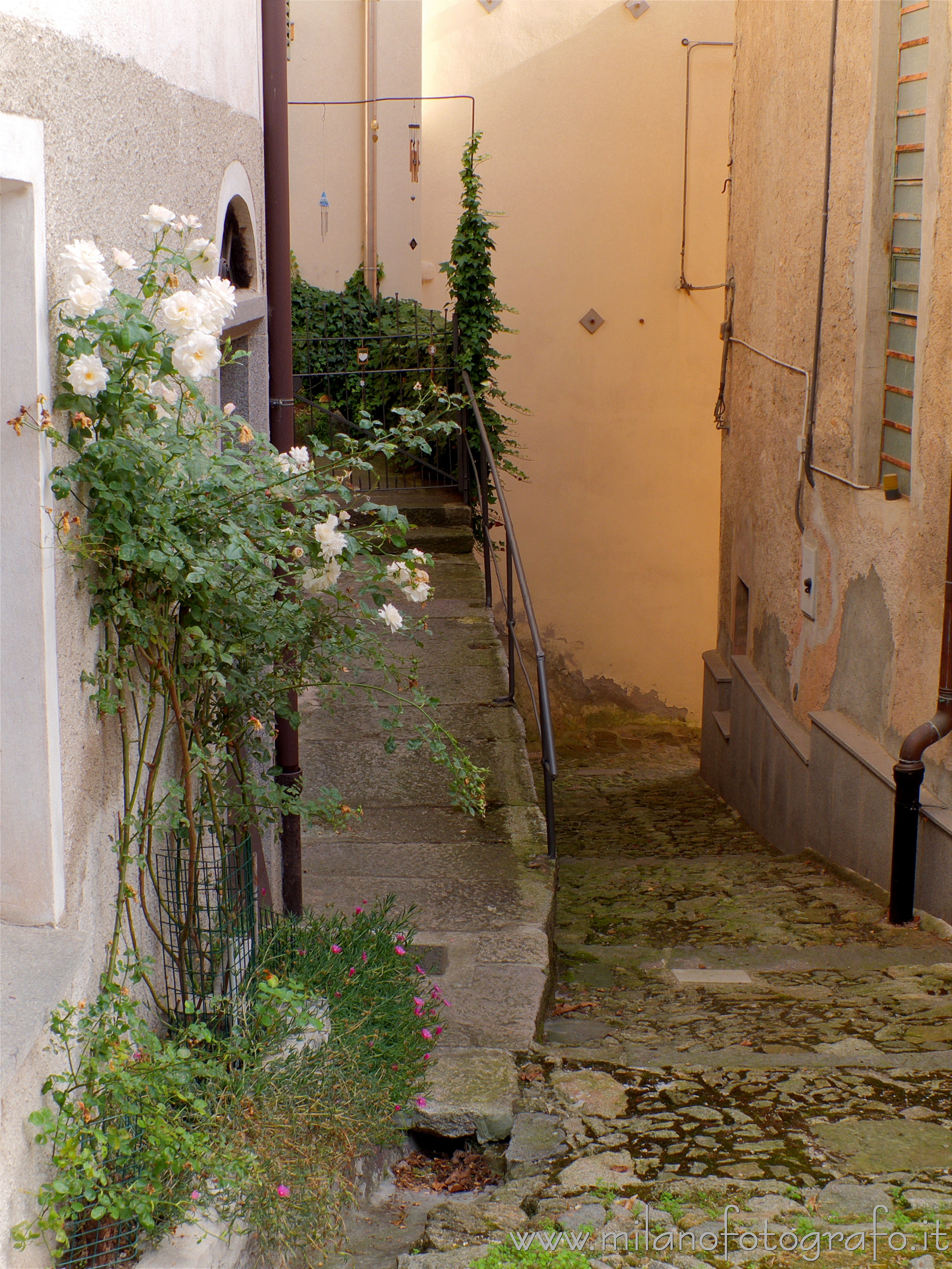 Quittengo fraction of Campiglia Cervo (Biella, Italy): Narrow street with white roses - Quittengo fraction of Campiglia Cervo (Biella, Italy)